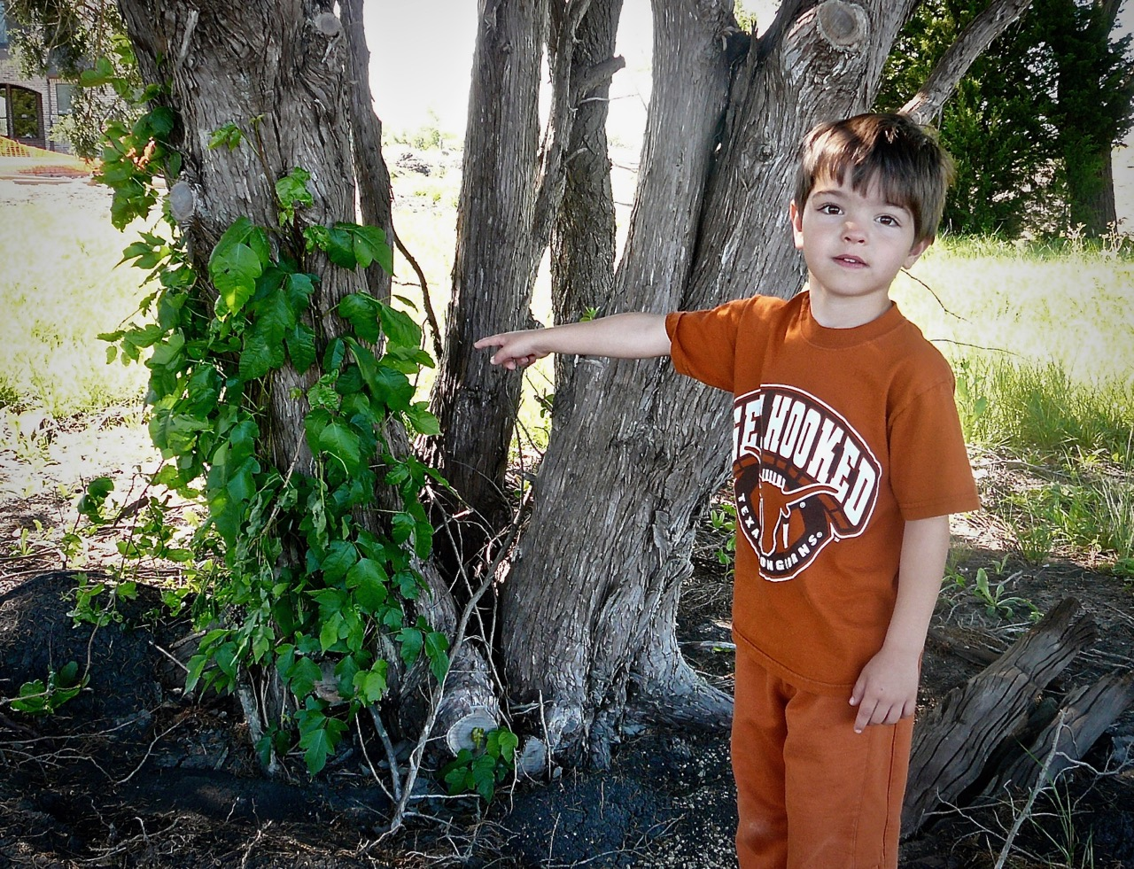 Poison ivy growing on a tree, ready to give your kids a rash.