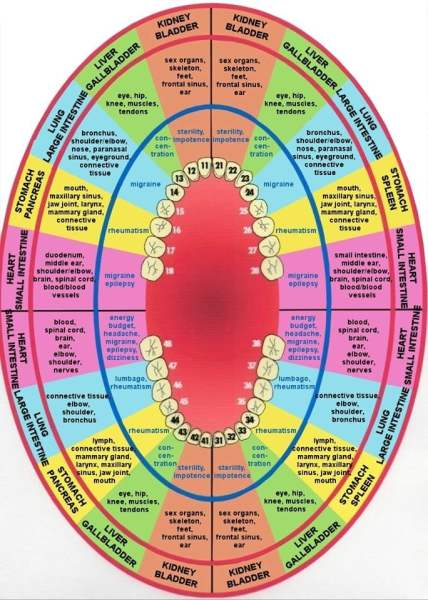 Meridian tooth charts are really a thing?
